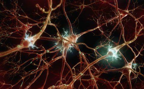 ВНС является частью нервной системы