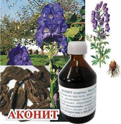 Аконит (Aconitum)