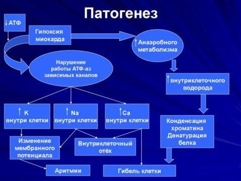 Причины возникновения гипоксии миокарда