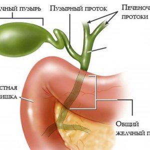 Желчный пузырь: функции органа, распространенные заболевания