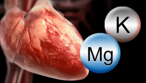 Калий-магниевый дефицит вызывает отёк и спазм сердечных мышечных волокон