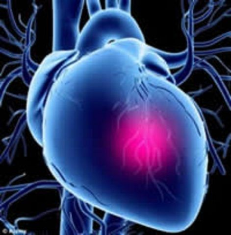 Сердце (фото)