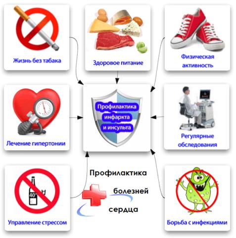 Основные позиции профилактики сердечно сосудистых заболеваний