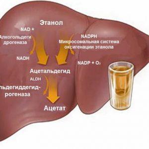 Почему часто болит печень после принятия алкоголя