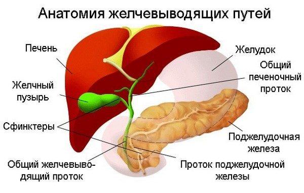 Проявление и лечение дисфункции желчного пузыря