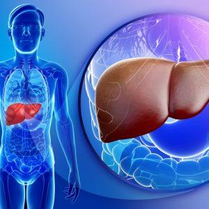 Ультразвуковое исследование при циррозе печени