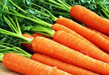 Морковь польза и вред для организма