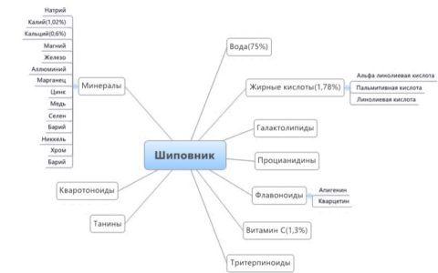 Полезные вещества, содержащиеся в шиповнике