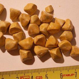 Лекарственные средства для дробления камней в желчном пузыре