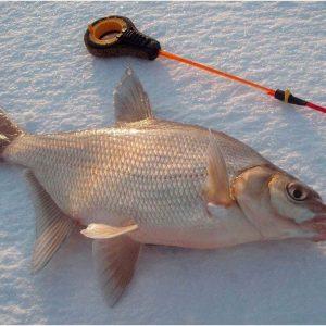 Рыба пелядь: описторхозная или нет?