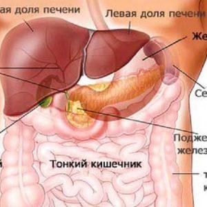 Строение, функционирование и месторасположение желчного пузыря