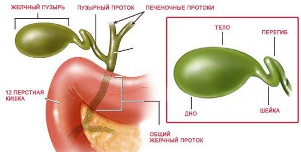 Симптомы загиба желчного пузыря