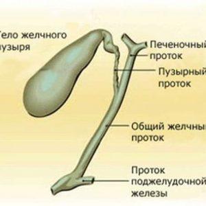 Диета при болезнях желчного пузыря