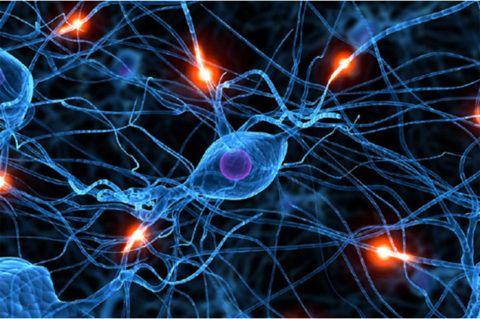 НЦД развивается на фоне нарушения работы нервной и сердечно-сосудистой систем