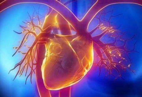 Факторы, влияющие на возникновение холестериновых бляшек на стенках сосудов